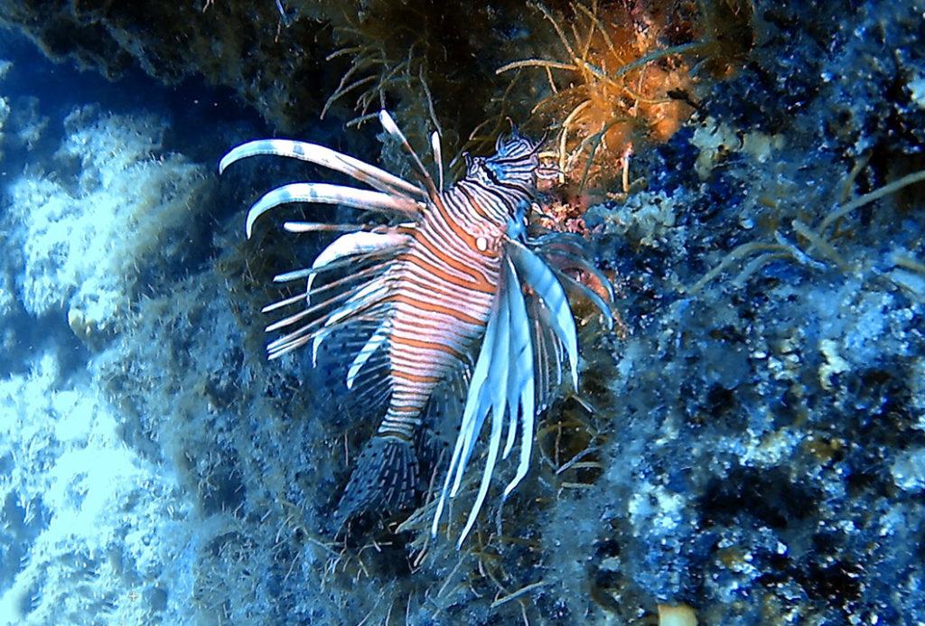 рыба лев, остров Родос