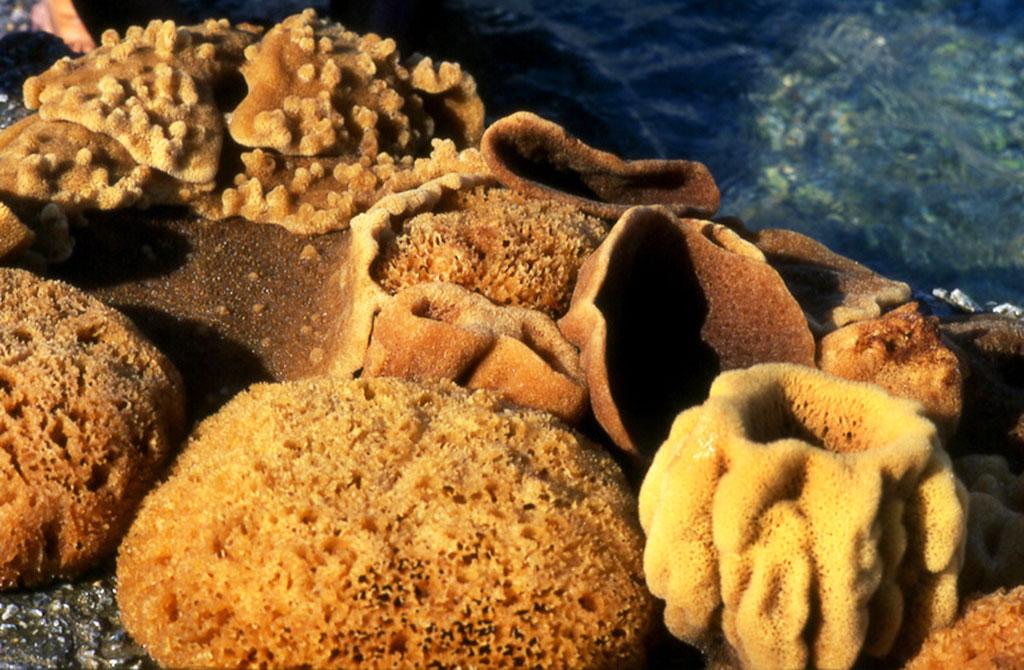 Морская губка - дайвинг на острове Родос